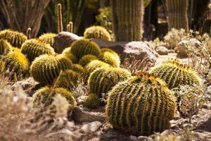 cactus ronds