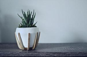 zèbre vert succulent photo