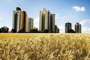 trigo et cidade