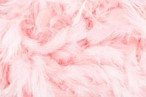 fond de plumes roses photo