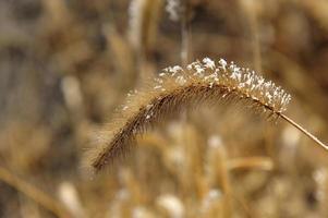 mauvaises herbes photo
