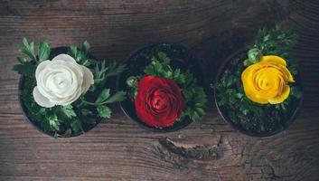 renoncules de fleurs photo