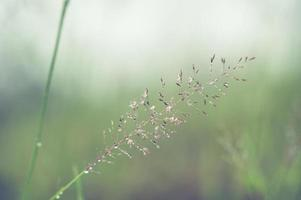 structures d'herbe à fleurs flou doux photo