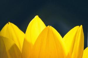 beau fond flou de flou avec des fleurs tendres. rétro gra photo