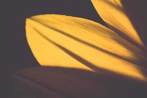 beau fond flou de flou avec des fleurs tendres. ancien. photo