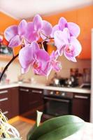 orchidées roses dans une cuisine luxueuse photo