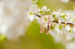anneaux de mariage sur un arbre en fleurs photo