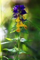 tendresse de fond de belles fleurs violettes photo