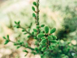 petit arbre photo