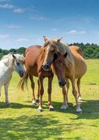 Mère et bébé poney câlins montrant de l'affection photo