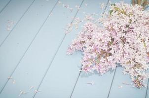 lilas en fleurs d'été photo