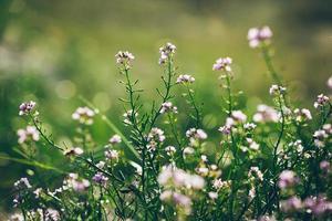 beau fond flou de flou avec des fleurs tendres .. rétro gr photo