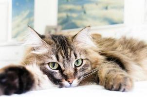 chaton fatigué photo