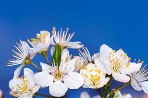 belle fleur, printemps photo