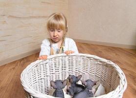Fille blonde triste derrière un panier de chatons sphynx photo