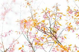 oiseau sur fleur de cerisier et sakura