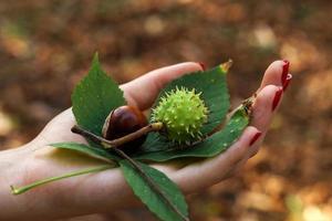 automne dans la main de la fille