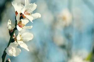 bourgeons en fleurs photo