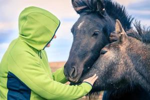 femme avec poneys islandais