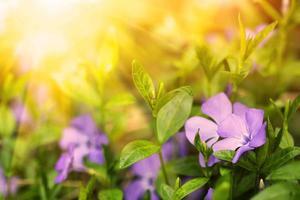 belles fleurs bleues dans une forêt photo