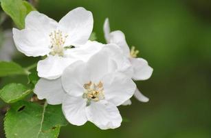 brunch des arbres en fleurs photo