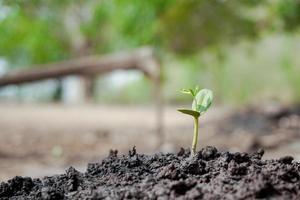 nouveau jeune arbre poussant du sol