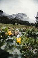 montagnes brumeuses et fleurs jaunes
