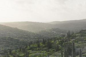champ de cactus sous un ciel nuageux photo