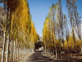 route bordée d'arbres vers khaplu