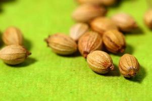 graines de coriandre photo