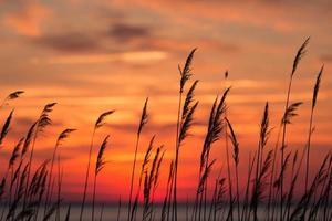 lever du soleil de la baie de chesapeake photo