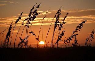 Lever / coucher du soleil à la plage avec de l'herbe de mer en silhouette photo