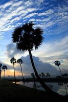 paysage de lever de soleil coloré avec des silhouettes de palmiers photo