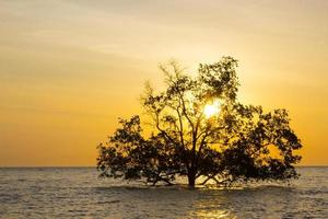 arbre en mer photo