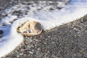 perles australiennes photo