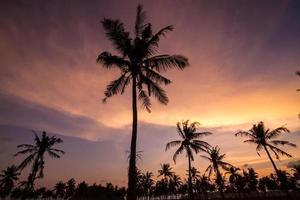 palmiers au beau coucher du soleil photo