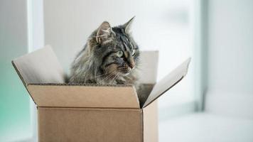 beau chat dans une boîte en carton photo