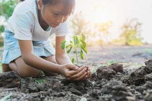 enfant plantant un jeune arbre photo