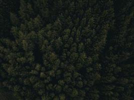 photographie aérienne d'arbres verts