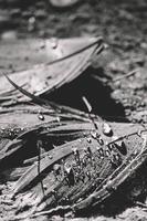 photo en niveaux de gris de gouttelettes d'eau