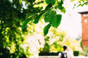 photo mise au point sélective de feuilles vertes