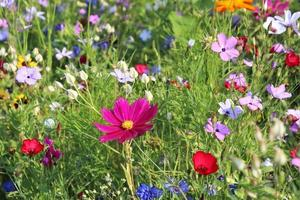 fleurs colorées dans le champ