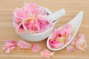 pétales de fleurs de pivoine photo