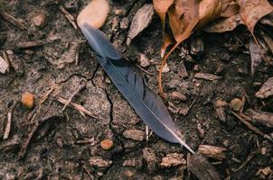plume noire entourée de feuilles séchées