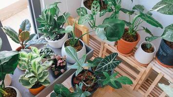 vue aérienne des plantes en pot