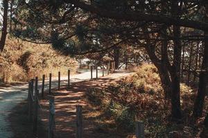 coup horizontal du chemin de la nature photo