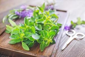 herbes aromatiques photo