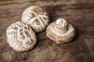 champignon shiitake