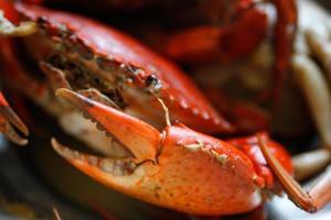 pince de crabe