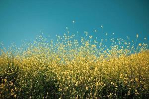 fleurs pétales jaunes